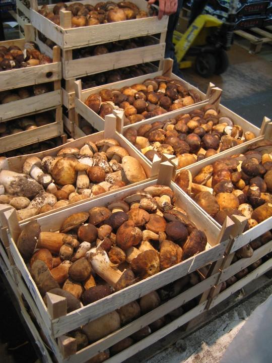 Fall's Mushrooms