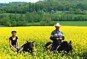 Day Six Horseback Ride through Sunflower Fields of Gascony