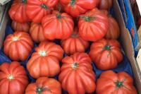 Beautiful Summer Tomatoes